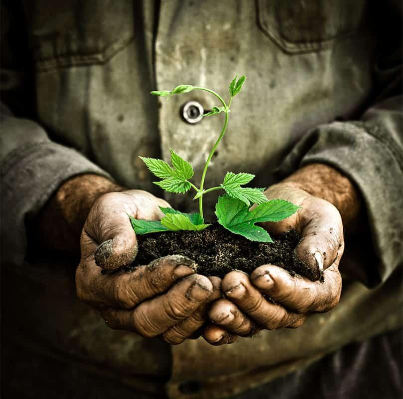 Gartenarbeit-gjl-dienstleistungen-kontakt